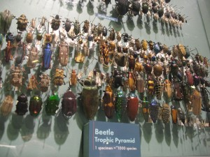 Beetle Trophic Pyramid - Detail