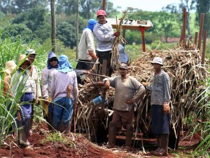 Manual harvesting is often exploitative and dangerous. In Brazil's sugarcane and ethanol industries, from 2002-2005, 312 workers died on the job.