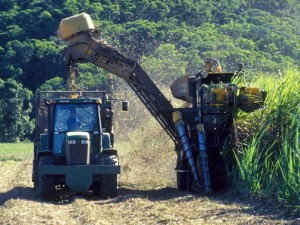 Traditional machine harvesting emits significant amounts of CO2.